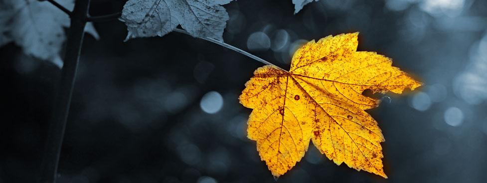 Die Herbstkraft