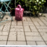 Endlich Wieder RegenEndlich Wieder Regen