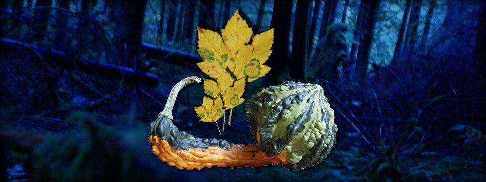 Die Herbstkraft Vom 16. – 20. Oktober 2019 Auf Dem Mühlenbachhof In Todtmoos-Au
